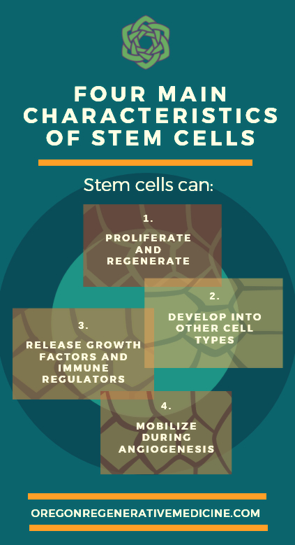 four main characteristics of stem cells used in stem cell face-lifts